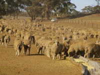 Drought Transport Subsidy off-farm asset threshold relaxed
