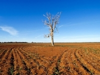 Transport Fund To Assist Drought-affected Farmers In New South Wales